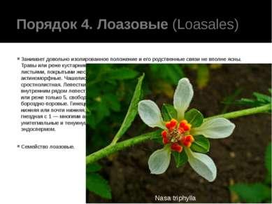 Порядок 4. Лоазовые(Loasales) Занимает довольно изолированное положение и ег...