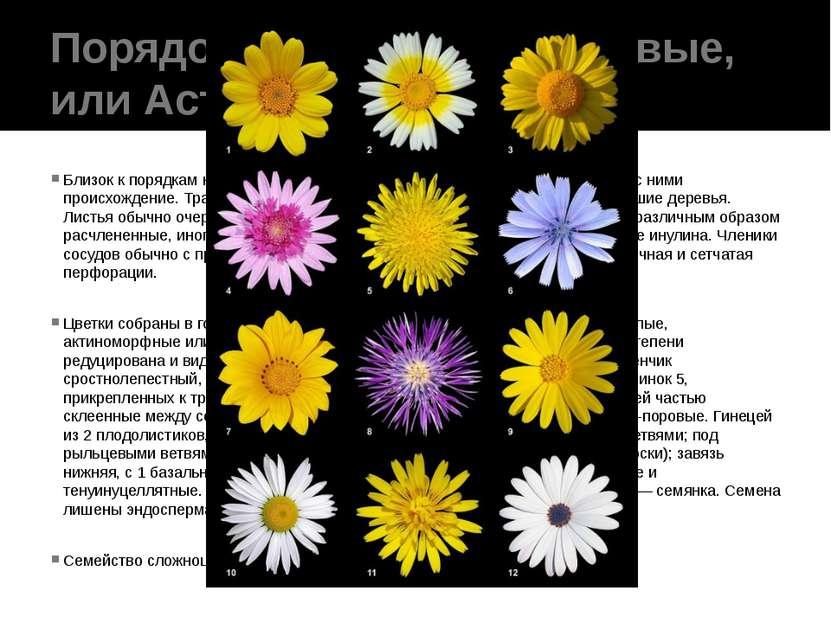 Порядок 10. Сложноцветковые, или Астровые(Asterales) Близок к порядкам колок...