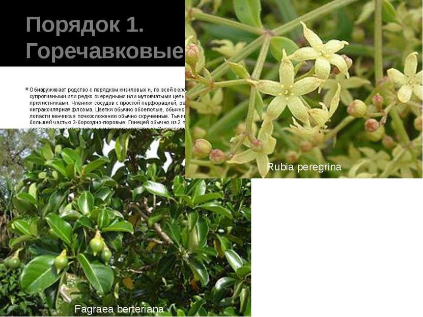 Порядок 1. Горечавковые(Gentianales) Обнаруживает родство с порядком кизилов...