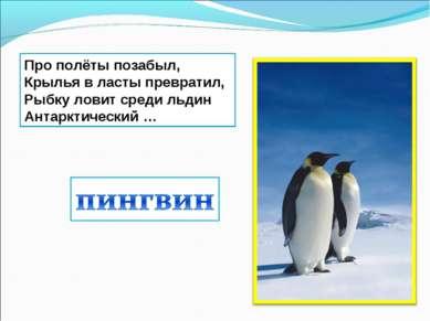 Про полёты позабыл, Крылья в ласты превратил, Рыбку ловит среди льдин Антаркт...