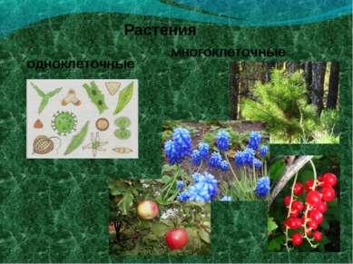 Растения одноклеточные многоклеточные