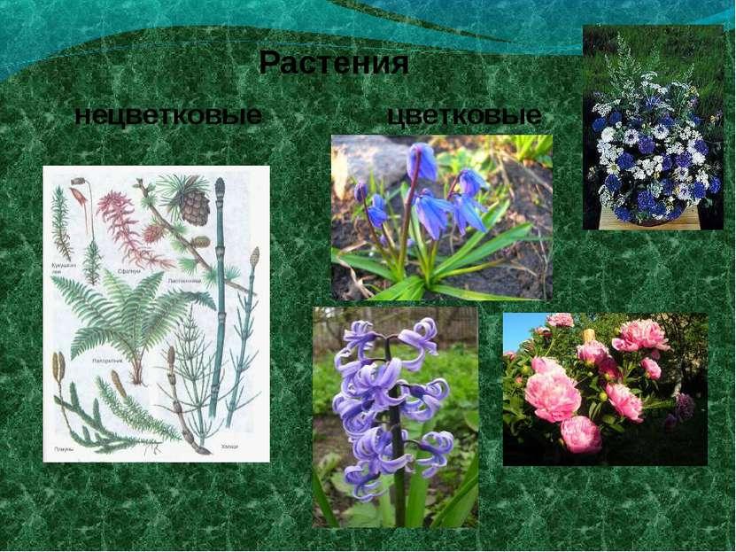Растения цветковые нецветковые