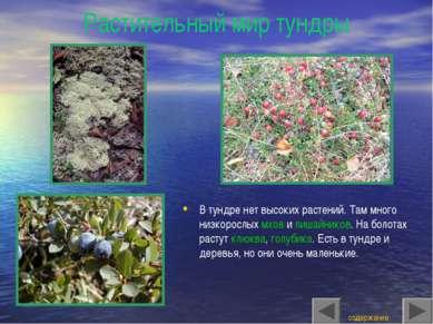 Растительный мир тундры В тундре нет высоких растений. Там много низкорослых ...