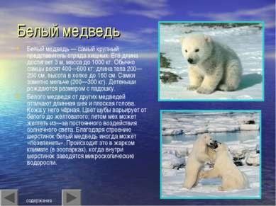 Белый медведь Белый медведь — самый крупный представитель отряда хищных. Его ...