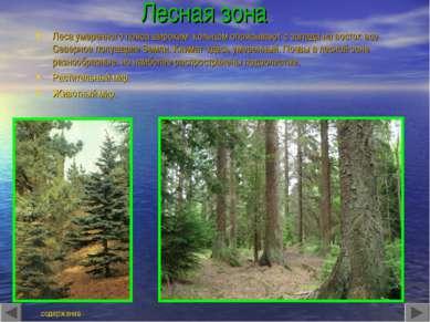 Лесная зона Леса умеренного пояса широким кольцом опоясывают с запада на вост...