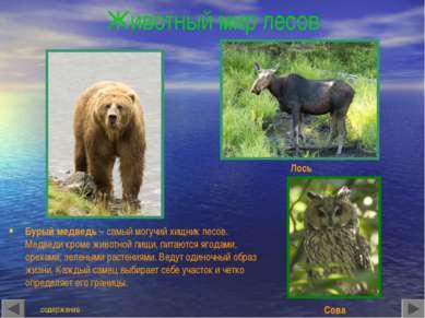Животный мир лесов Бурый медведь – самый могучий хищник лесов. Медведи кроме ...