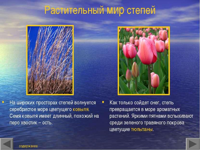 Растительный мир степей На широких просторах степей волнуется серебристое мор...