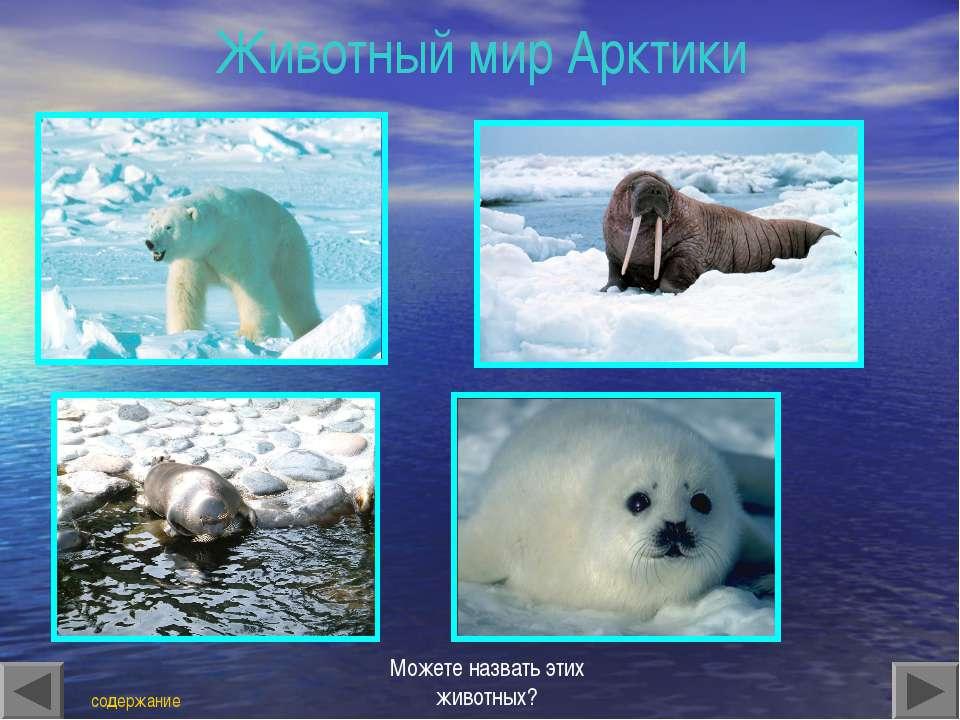 Животный мир Арктики содержание Можете назвать этих животных?