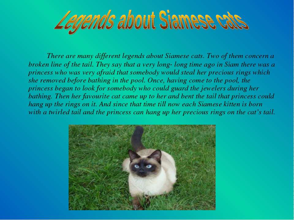 There are many different legends about Siamese cats. Two of them concern a br...