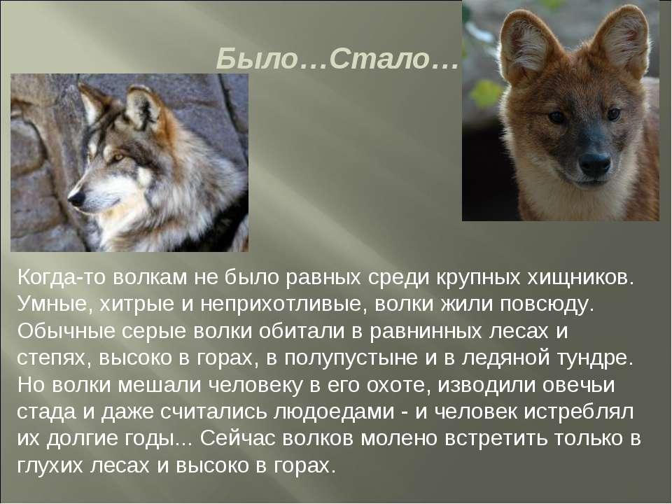 Было…Стало… Когда-то волкам не было равных среди крупных хищников. Умные, хит...