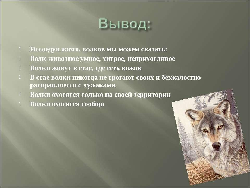 Исследуя жизнь волков мы можем сказать: Волк-животное умное, хитрое, неприхот...