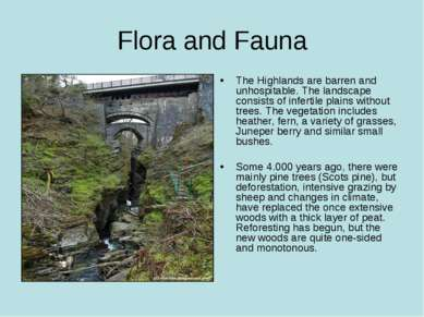 Flora and Fauna The Highlands are barren and unhospitable. The landscape cons...