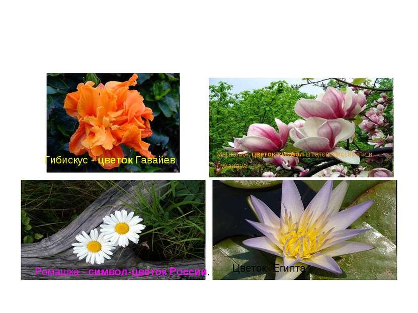 Гибискус - цветок Гавайев Магнолия. цветок-символ штатов Миссисипи и Луизиана...