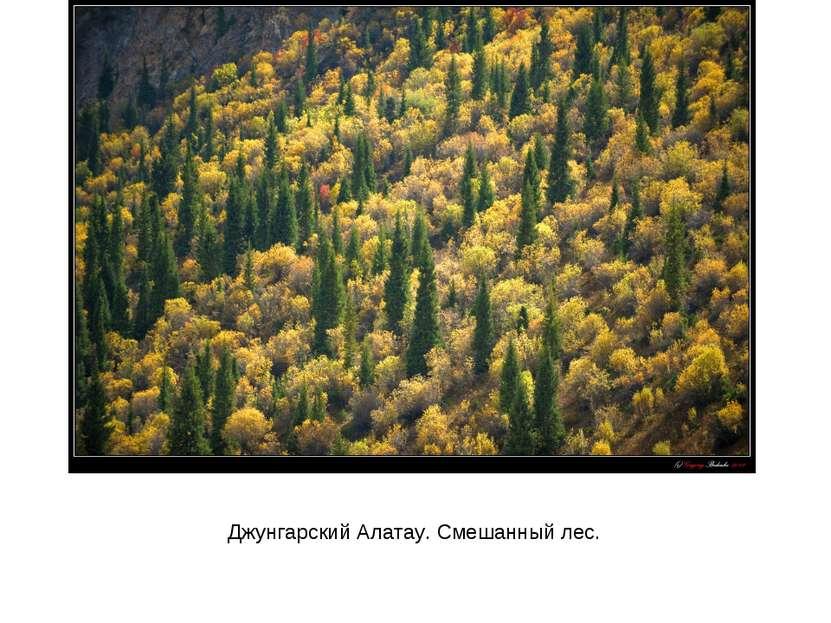 Джунгарский Алатау. Смешанный лес.