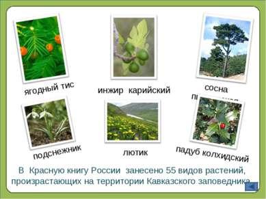 В Красную книгу России занесено 55 видов растений, произрастающих на территор...