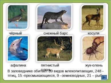 В заповеднике обитает 89 видов млекопитающих, 248 - птиц, 15 -пресмыкающихся,...