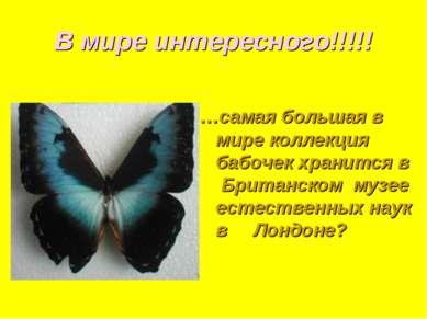 В мире интересного!!!!! …самая большая в мире коллекция бабочек хранится в Бр...