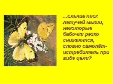 …слыша писк летучей мыши, некоторые бабочки резко снижаются, словно самолёт-и...