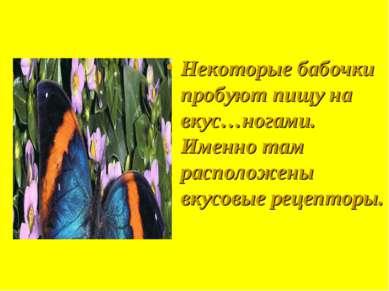 Некоторые бабочки пробуют пищу на вкус…ногами. Именно там расположены вкусовы...