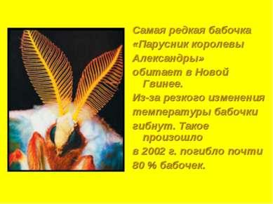 Самая редкая бабочка «Парусник королевы Александры» обитает в Новой Гвинее. И...