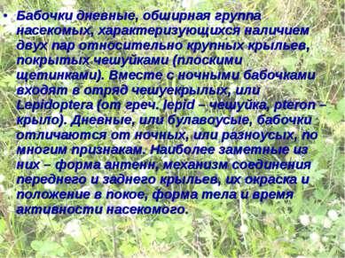 Бабочки дневные, обширная группа насекомых, характеризующихся наличием двух п...