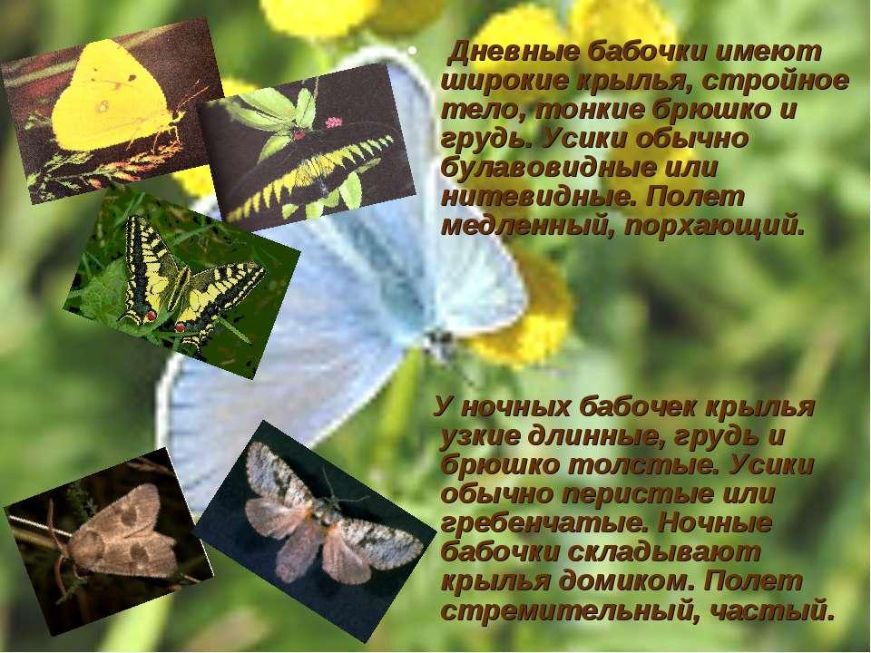 Дневные бабочки имеют широкие крылья, стройное тело, тонкие брюшко и грудь. У...