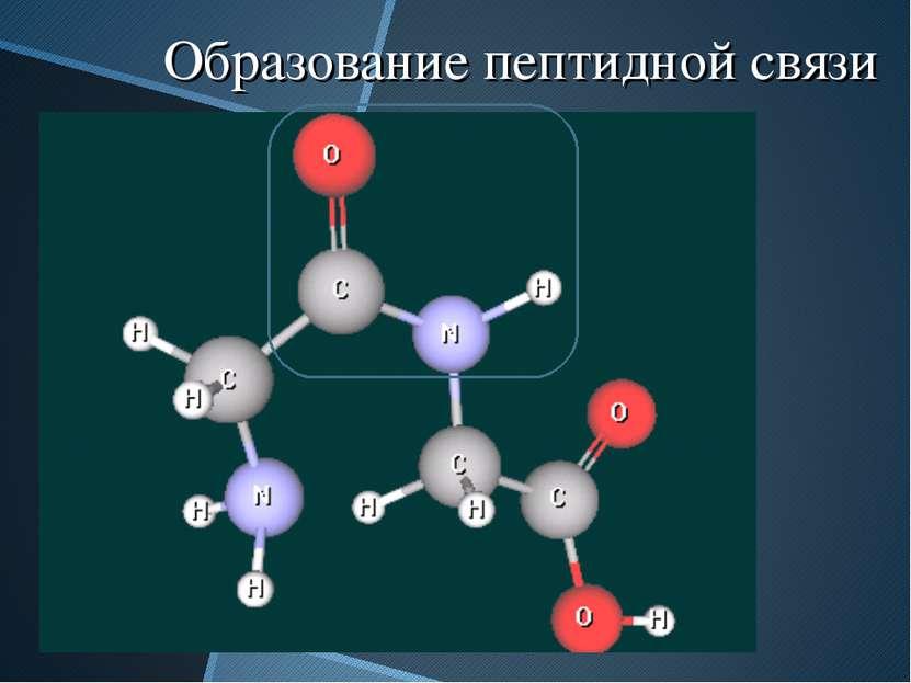 Образование пептидной связи