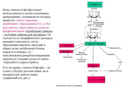 Итак, глюкозо-6-фосфат может использоваться в клетке в различных превращениях...