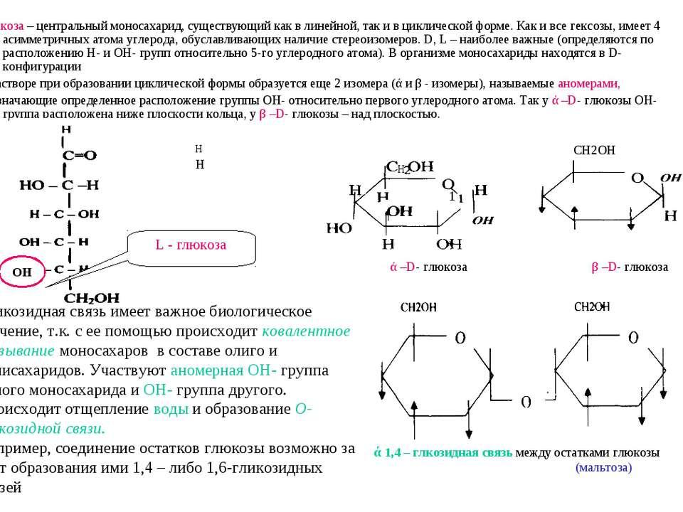 Глюкоза – центральный моносахарид, существующий как в линейной, так и в цикли...