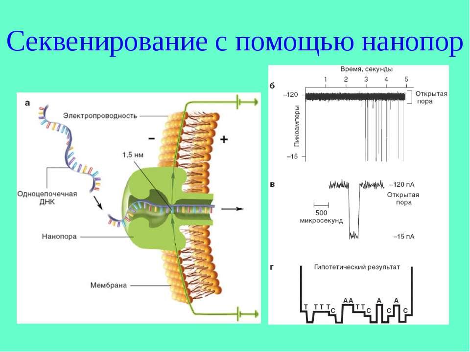 Секвенирование с помощью нанопор