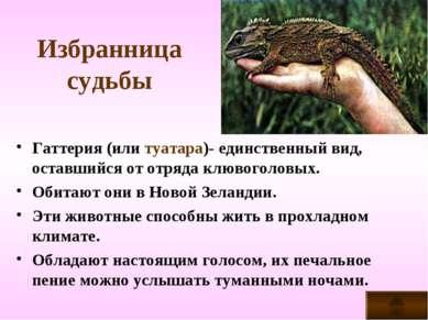 Избранница судьбы Гаттерия (или туатара)- единственный вид, оставшийся от отр...