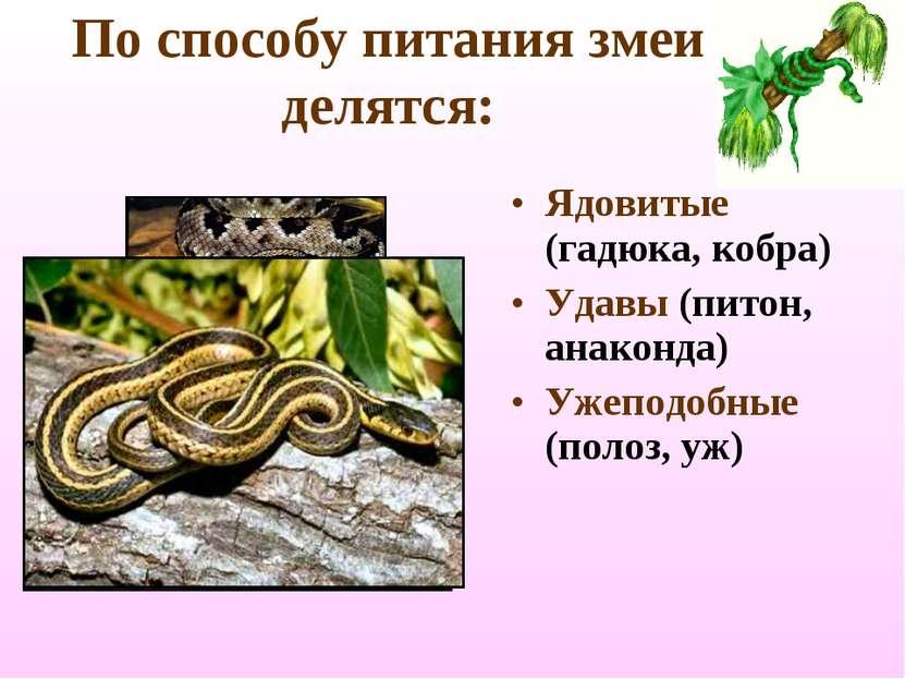 По способу питания змеи делятся: Ядовитые (гадюка, кобра) Удавы (питон, анако...