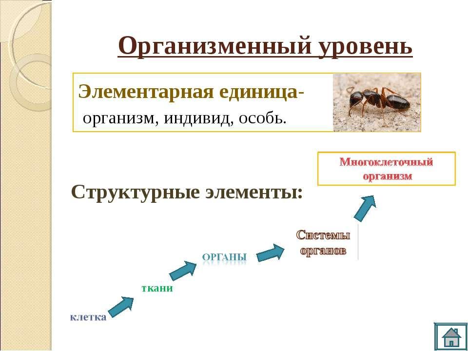 Элементарная единица- организм, индивид, особь. Организменный уровень