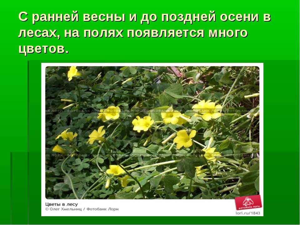 С ранней весны и до поздней осени в лесах, на полях появляется много цветов.