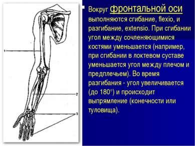 Вокруг фронтальной оси выполняются сгибание, flexio, и разгибание, extensio. ...