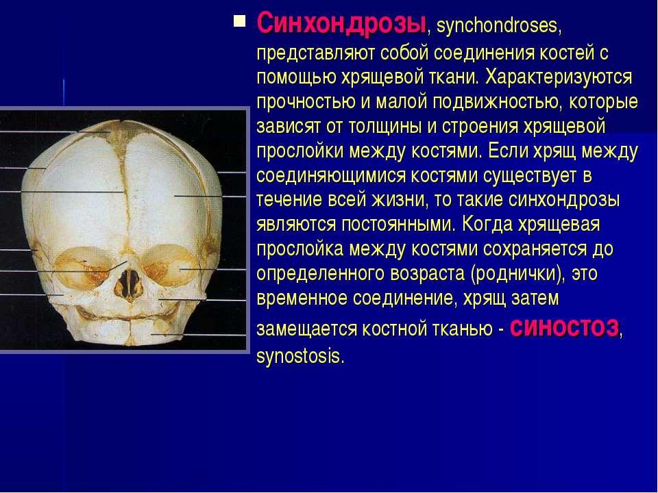 Синхондрозы, synchondroses, представляют собой соединения костей с помощью хр...