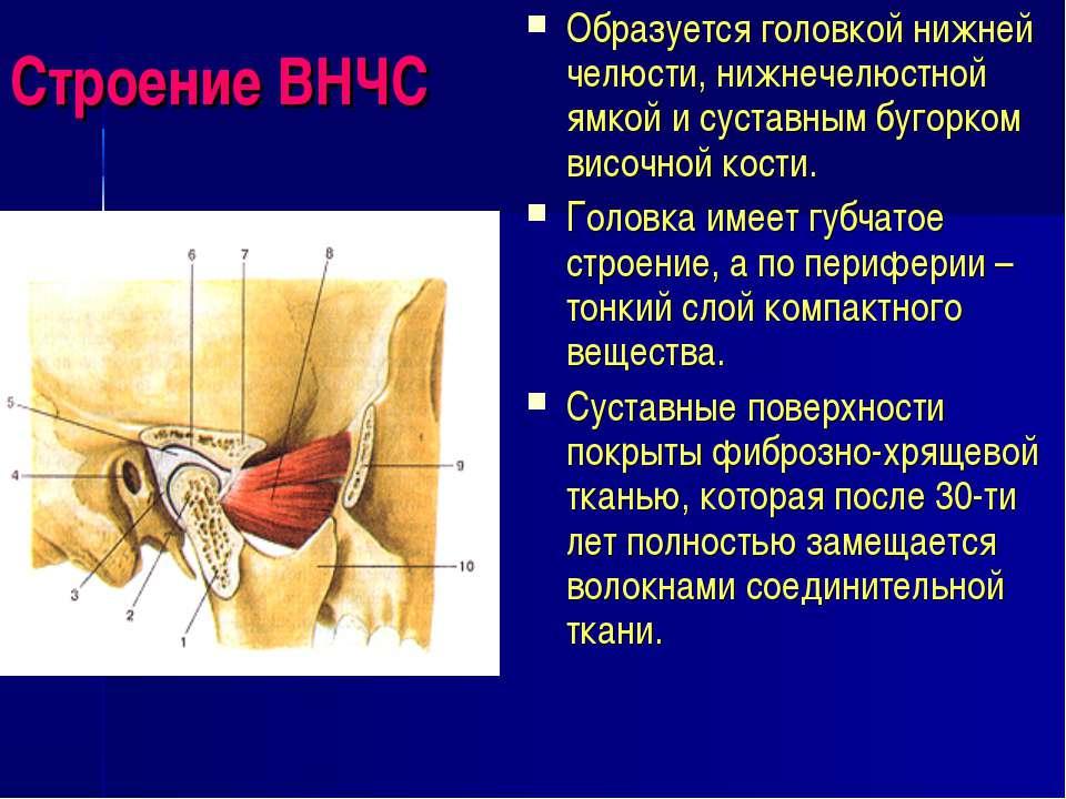 Строение ВНЧС Образуется головкой нижней челюсти, нижнечелюстной ямкой и суст...