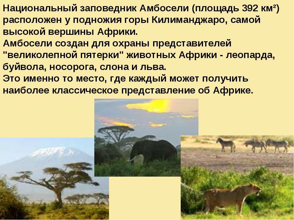 Национальный заповедник Амбосели (площадь 392 км²) расположен у подножия горы...