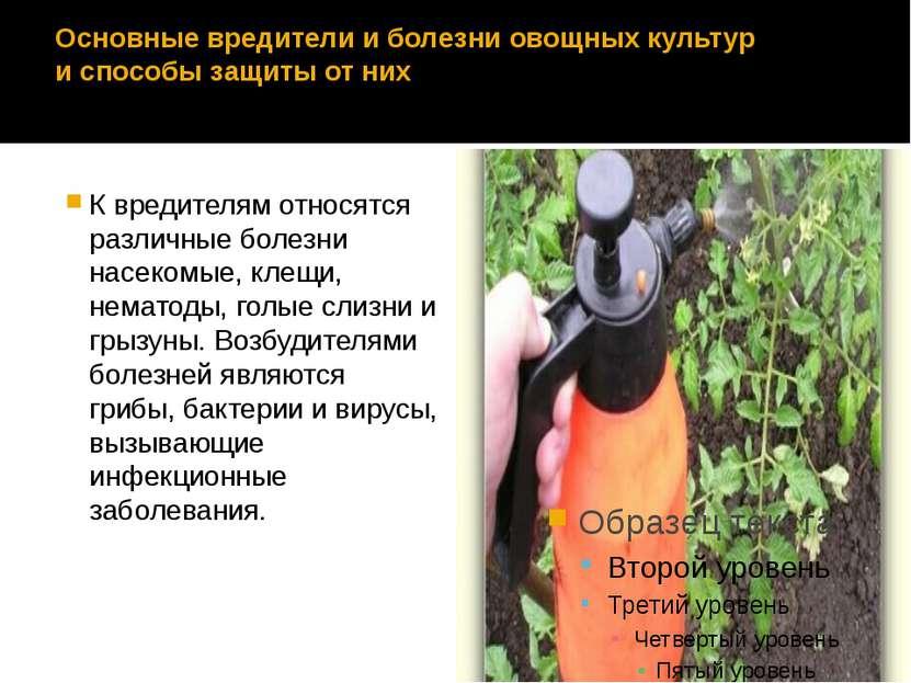 Основные вредители и болезни овощных культур и способы защиты от них К вредит...
