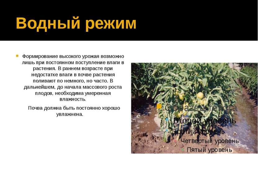 Водный режим Формирование высокого урожая возможно лишь при постоянном поступ...