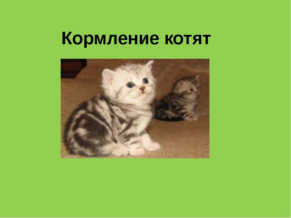 Кормление котят
