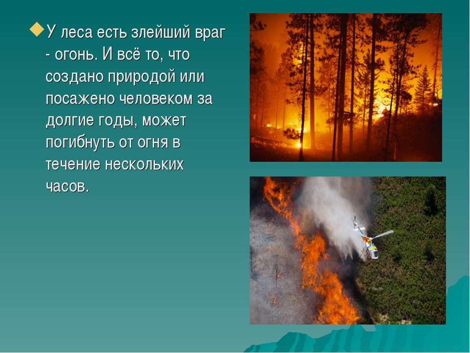 У леса есть злейший враг - огонь. И всё то, что создано природой или посажено...