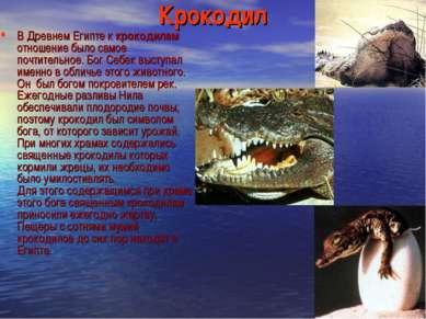 Крокодил В Древнем Египте к крокодилам отношение было самое почтительное. Бог...
