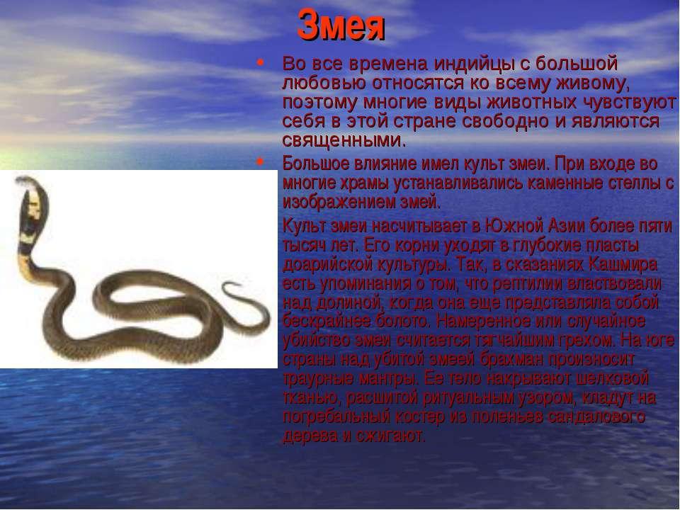 Змея Во все времена индийцы с большой любовью относятся ко всему живому, поэт...