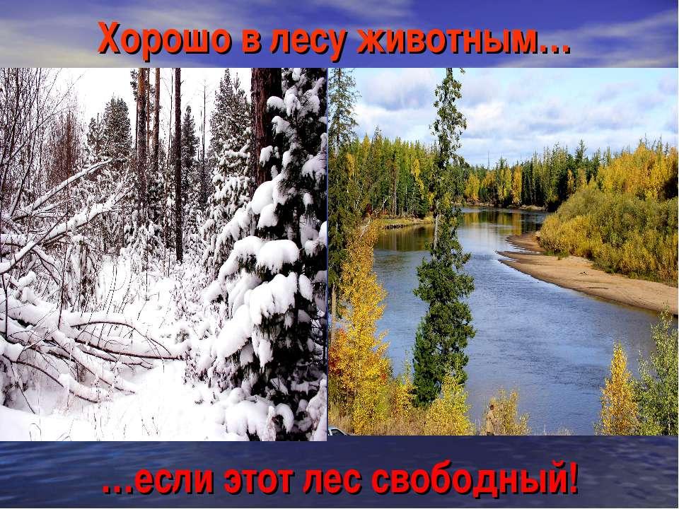 Хорошо в лесу животным… …если этот лес свободный!