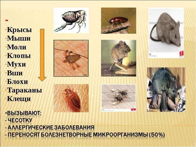 - Крысы Мыши Моли Клопы Мухи Вши Блохи Тараканы Клещи