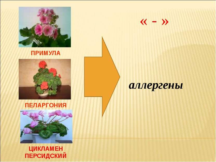 ПРИМУЛА ПЕЛАРГОНИЯ ЦИКЛАМЕН ПЕРСИДСКИЙ аллергены « - »