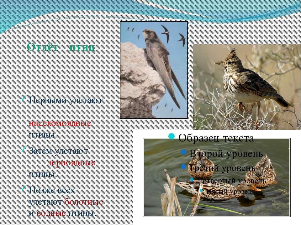 Первыми улетают насекомоядные птицы. Затем улетают зерноядные птицы. Позже вс...