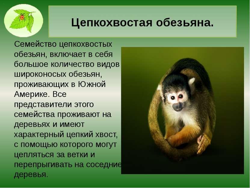 Ягуар. Одно из крупнейших хищных млекопитающих с мускулистым телом, головой о...