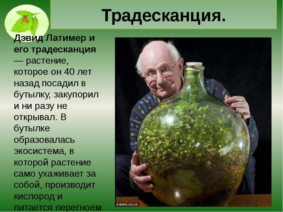 Самое большое соцветие в мире. Существует растение (не цветок), но соцветие, ...